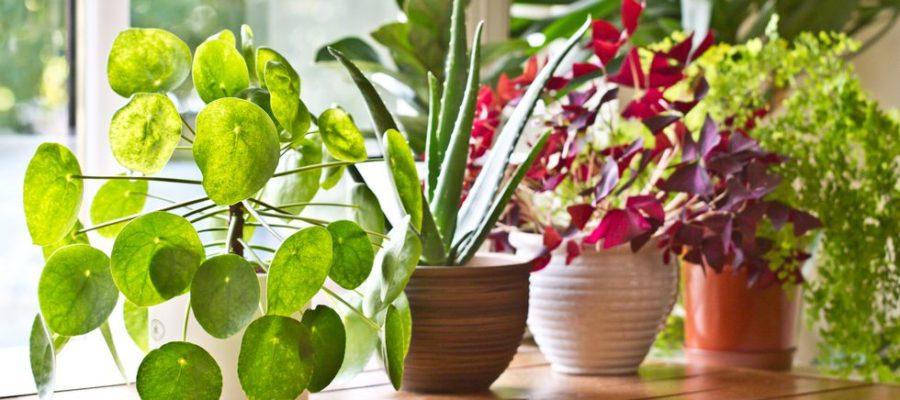 plants-indoor-air-quality-colony-cedar-rapids-iowa-city-north-liberty